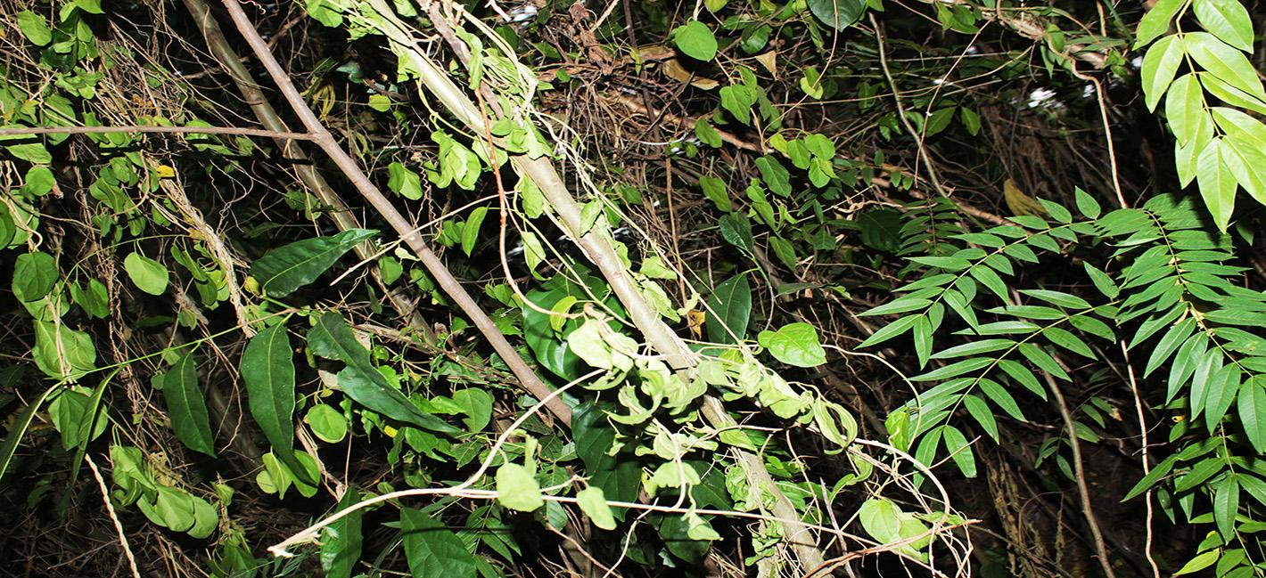 Analog forest Uganda